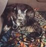 Roxxie & Moonie