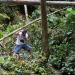 Fotografando a floresta Amazônica