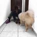 Me and my doggo??