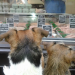 Window shopping with the pups