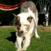 My dog Danubio