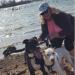 Dogsit Texas 2018