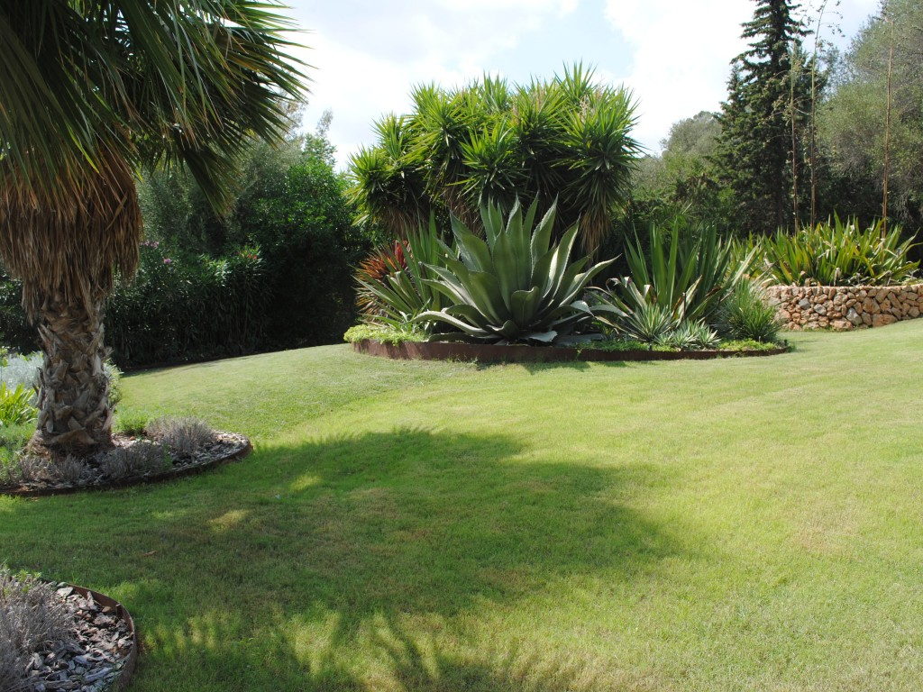 Lawn today