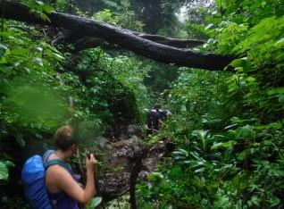 Day 2 - Fallen Trees