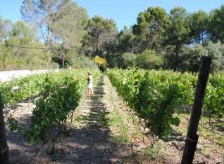 Takken invlechten in de wijngaard